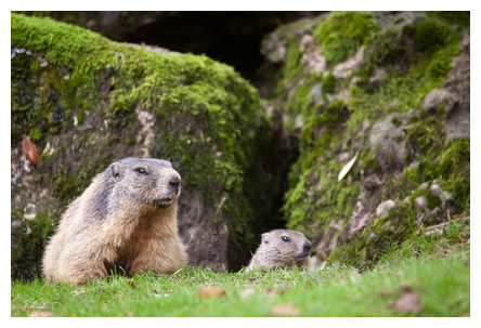 Mr. Marmot vs. the Modern Medicine Man